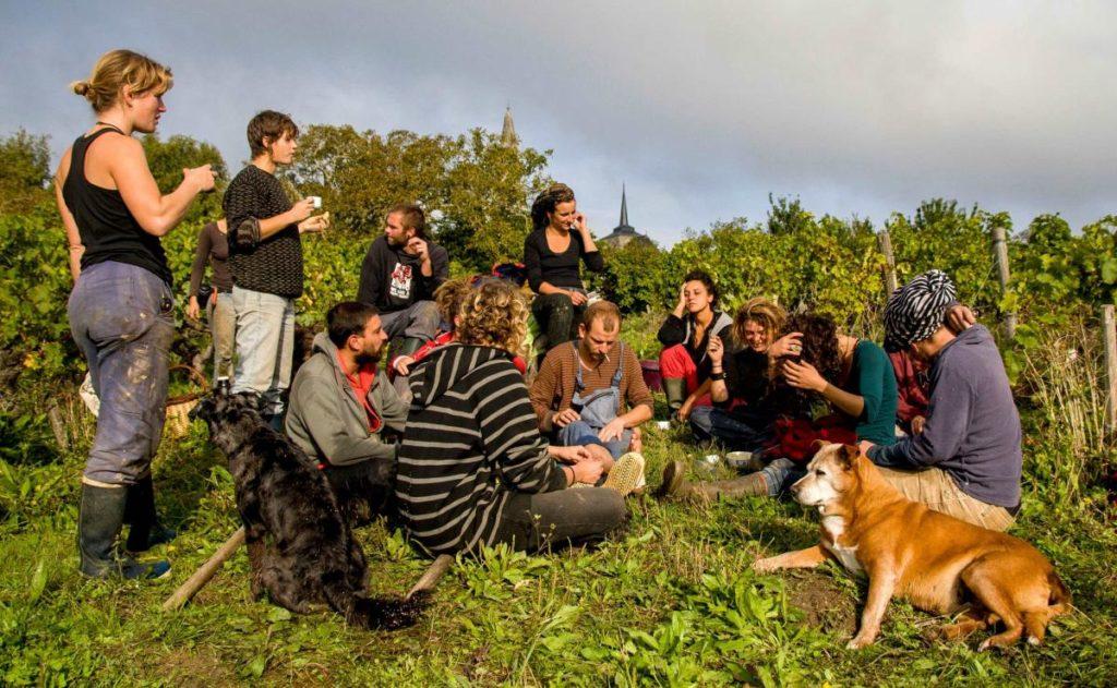 Un film de 10 mn sur le vin durable