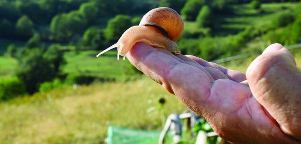 L'élevage d'escargot peut se pratiquer sur moins d'un hectare