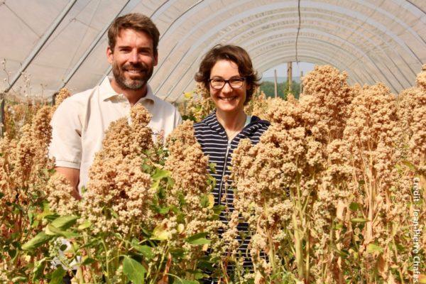 Maud et Jason Abbott se sont lancés en 2009 dans la culture du quinoa en Anjou.