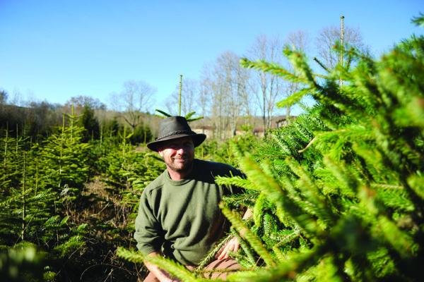 Michel Vuillier cultive des sapins de Noël bio