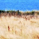 Belle-Île-en-Mer : Autosuffisance à l'horizon ?