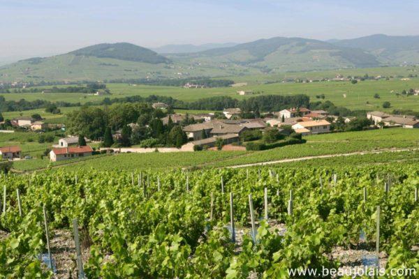À moins d'une heure de Lyon, le Beaujolais, territoire durable et innovant, vous accueille dans un écrin de nature, avec son réseau de 42 villages d'accueil !