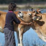 Le bien-être animal jusqu'au bout
