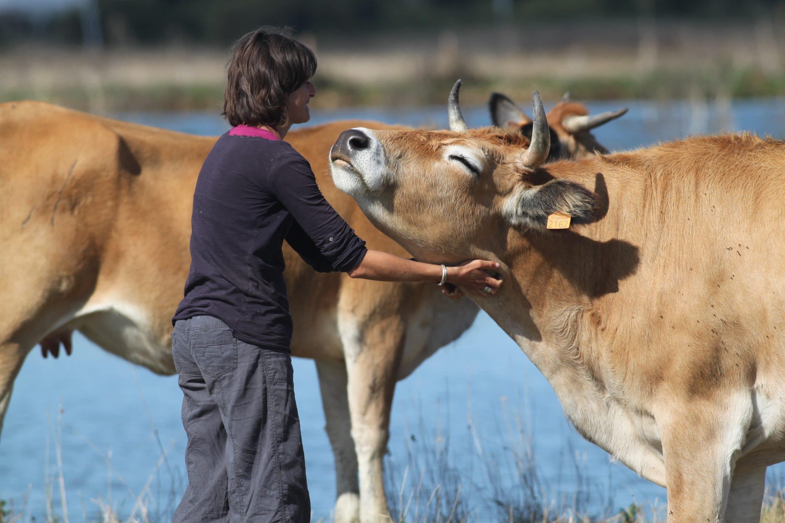 Objectif : créer une vingtaine de caissons mobiles qui permettront que les deux premières étapes de l'abattage des animaux soient réalisées sur la ferme, par des professionnels.