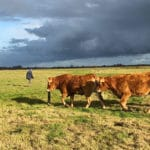 La fin de l'élevage, l'ère de l'in vitro ?