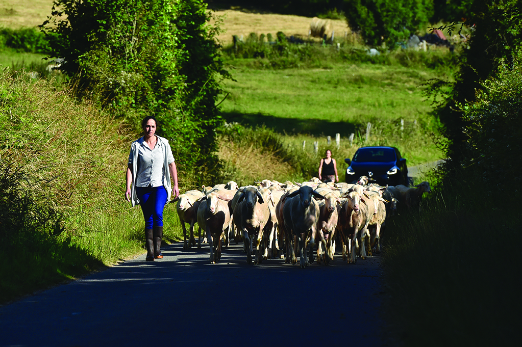 La ferme de Ber'Tommes, dans le Calvados, à Clécy