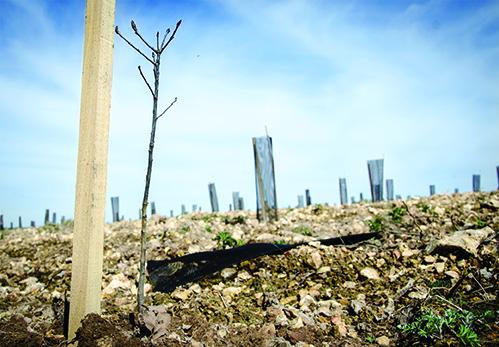 Un million d'arbres. Voici l'objectif que s'est fixé Reforest'Action pour son appel national à projets de reboisement, lancé en mai 2018 et qui se poursuit cet hiver.