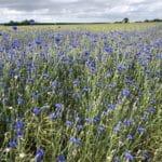 L'agriculture bio est rentable