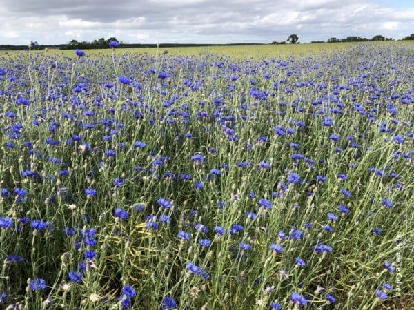 Les exploitations agrobiologiques certifiées bio s'avèrent plus rentables que les exploitations conventionnelles, alors que leurs exigences environnementales sont élevées.