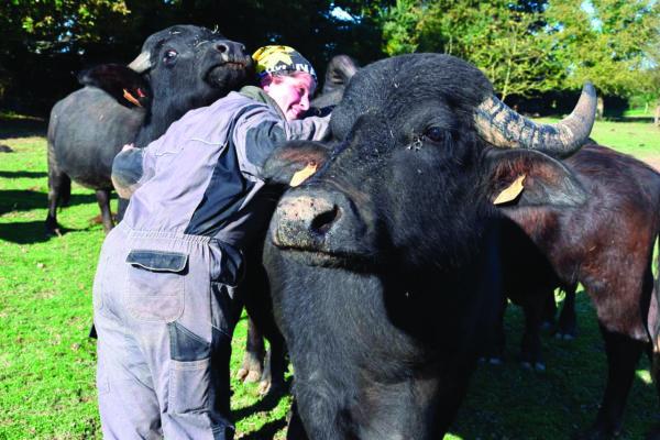 Avec le lait de ses bufflonnes, Fanny Bertrand fabrique de la mozzarella, des yaourts, du fromage blanc et du fromage frais à tartiner.