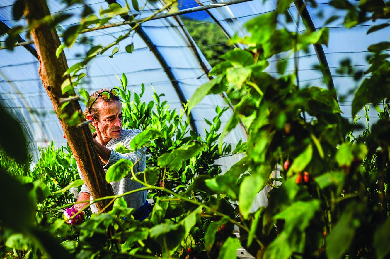 Cultures atypiques, pratiques respectueuses de l'environnement… Partout en France des paysans répondent aux défis que lance la planète. Ici, Laurent Dieval, Oms.