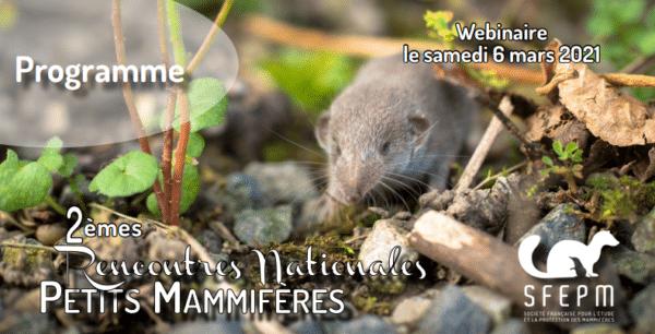 Un webinaire pour les amoureux des mammifères