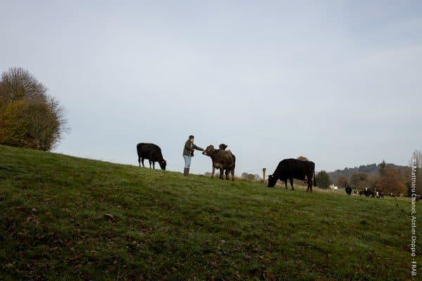 En Bretagne, l'agriculture biologique est en manque de salariés agricoles.