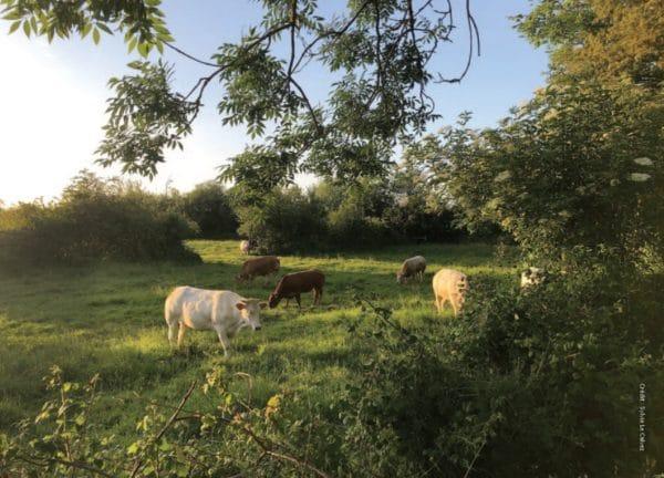 Grâce à la campagne de financement « AF.TER », lancée en début d'année par l'Association française d'agroforesterie (Afa), les entreprises peuvent soutenir des exploitations agricoles désireuses d'introduire ou de réintégrer les arbres dans leurs systèmes de production.