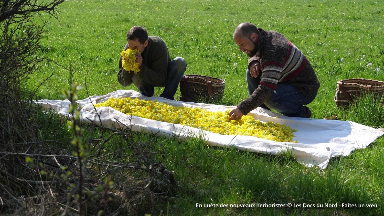 En quête des nouveaux herboristes, un des films sélectionnés dans le cadre de Caméra des champs.