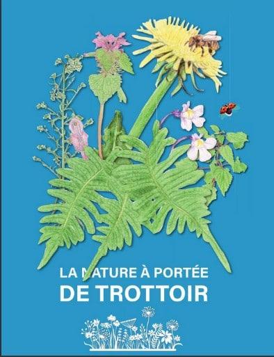 Cinq étudiants ont conçu un guide recensant les herbes des trottoirs de la ville d'Orsay dans l'Essonne pour sensibiliser le plus grand nombre à leur existence et à leurs bienfaits.