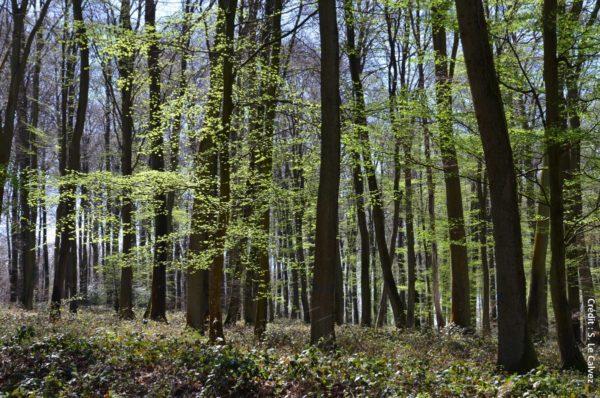Les 2, 3 et 4 juillet, des journées et des nuits partagées en forêt partout en France